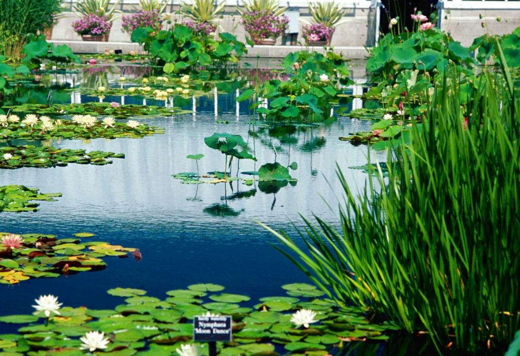 紐約市立植物園